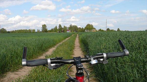 Дорога на Селище через поля