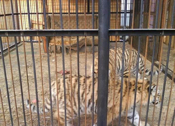 Питомцы зоопарка