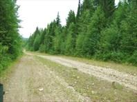 Старая дорога от п.Старый Бисер к п.Теплая Гора
