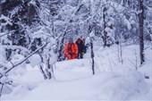 Сквозь заснеженный лес